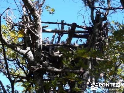 El Castañar de El Tiemblo , Un bosque mágico;senderismo el pardo;excursiones guadalajara